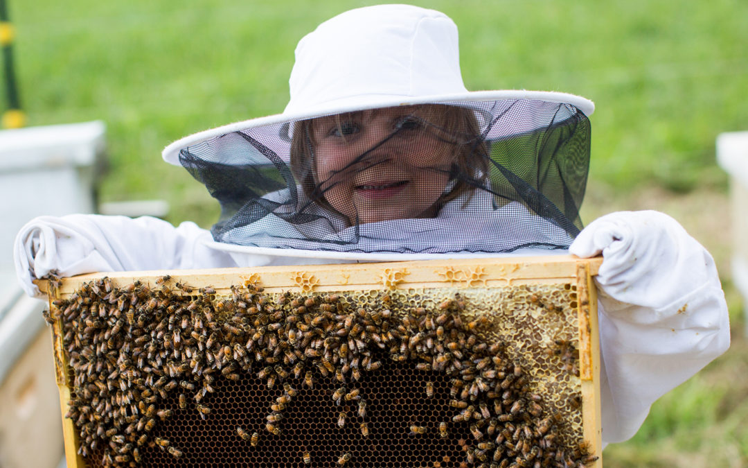 Welcome to our new Beekeeping Website!