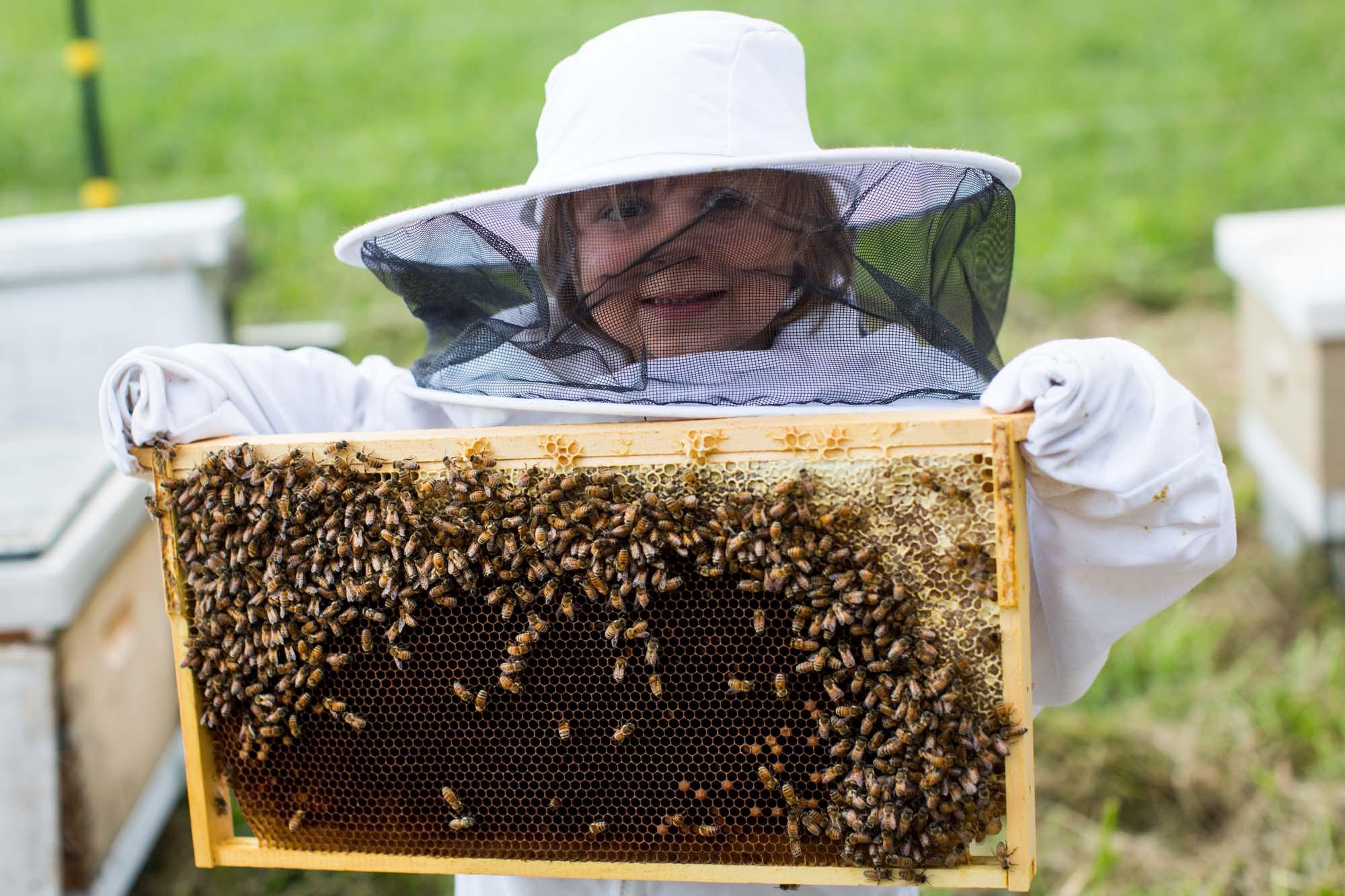 Bee. Honey and Hive   Brevard, NC